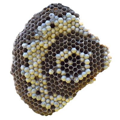 cooperacion-evolucion-celulas-9